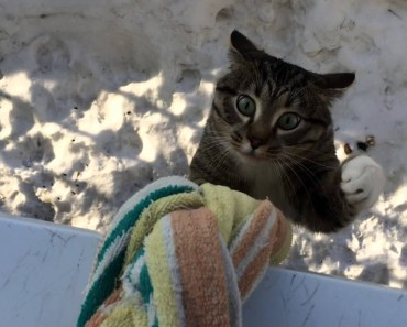 Alpinist Cat - Top Funny Climbing and Hanging Cats Videos Compilation 2017 [BEST OF] - alpinist cat top funny climbing and hanging cats videos compilation 2017 best of