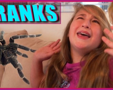 Big Scary Spider Prank - Cute Baby - Funny Video - big scary spider prank cute baby funny video