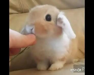 Cute Hamster    Funny TV - cute hamster funny tv