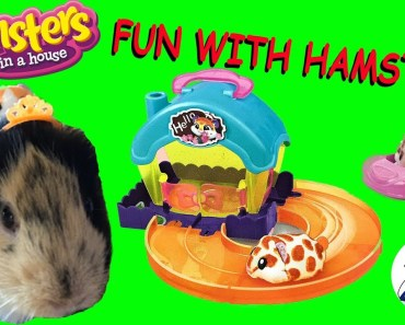 Fun With Hamsters in a House. - fun with hamsters in a house