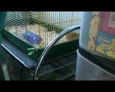 FUNNIEST HAMSTER SQUEAK EVER!!! (HILARIOUS!!! MUST SEE!!!) - funniest hamster squeak ever hilarious must see