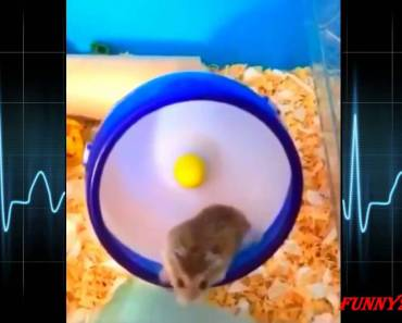 funny animals videos - Hamsters ep 1 - funny animals videos hamsters ep 1