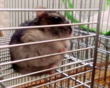 Funny hamster in shock - funny hamster in shock