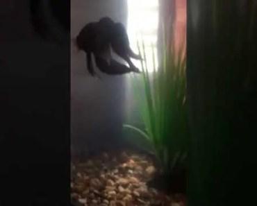 Funny hamster noise - funny hamster noise