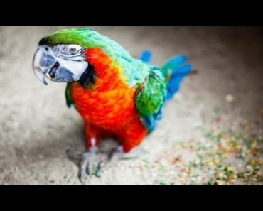 Funny Parrots Talking Like Humans - Seriously Hilarious! - funny parrots talking like humans seriously hilarious