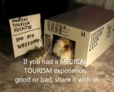 Hamster and guinea pig show medical tourism debackle @ Funny Animal Videos - hamster and guinea pig show medical tourism debackle funny animal videos