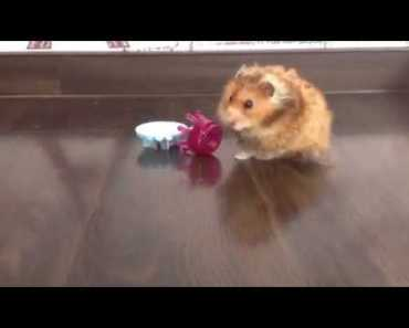 Hamster eating a cucumber smoothie - hamster eating a cucumber smoothie