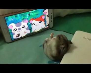 Hamtaro funny hamster - hamtaro funny hamster