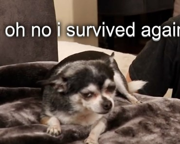 jenna's dogs struggling to survive for 3 minutes straight - jennas dogs struggling to survive for 3 minutes straight