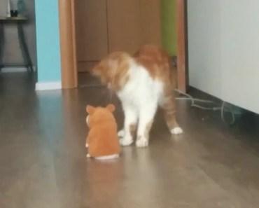 Kira and hamster. Funny cat - kira and hamster funny cat