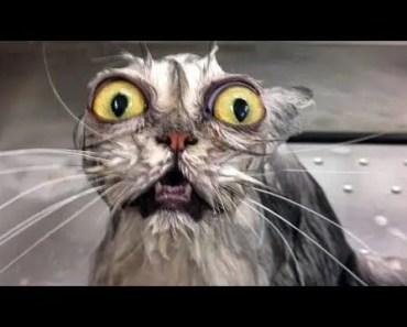 Lustige TIERE Wasser FEHLT, die dich LACHEN lassen - Epic FUNNY ANIMAL Videos - lustige tiere wasser fehlt die dich lachen lassen epic funny animal videos