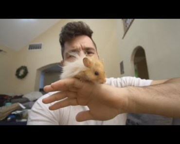 me and my hamster - me and my hamster