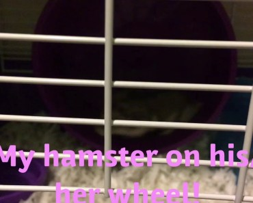 My Hamster On His Wheel(funny music) - my hamster on his wheelfunny music