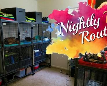 Nightly Routine! (w/ Hedgehogs, Tenrec, Guinea Pigs & Hamsters) - nightly routine w hedgehogs tenrec guinea pigs hamsters