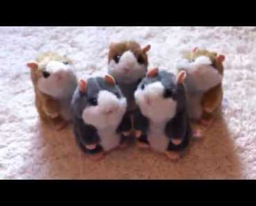 Talking hamster toy - talking hamster toy