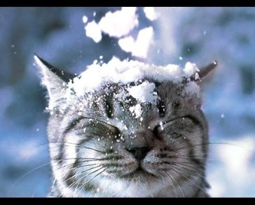 Top Funny Animals in Snow Videos Compilation - top funny animals in snow videos compilation