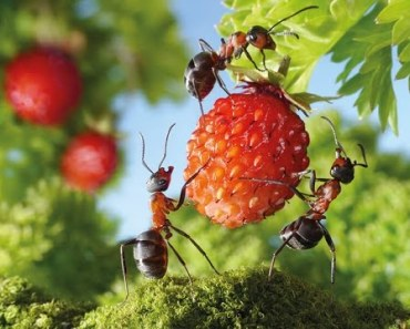 Top Funny Ant Videos Compilation - The Power of Teamwork - top funny ant videos compilation the power of teamwork