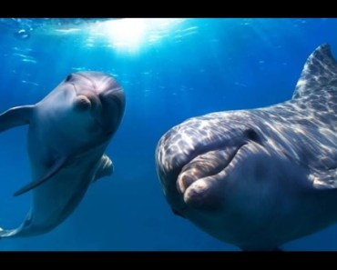 Top Funny Dolphin Videos Compilation 2017 [BEST OF] - Cute Animals - top funny dolphin videos compilation 2017 best of cute animals