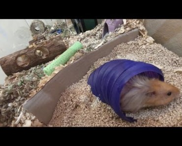 we gave our hamster an upgrade - we gave our hamster an upgrade