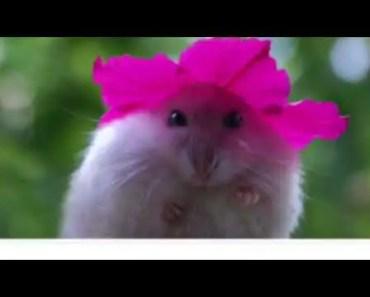 Weirdo Hamsters - weirdo hamsters