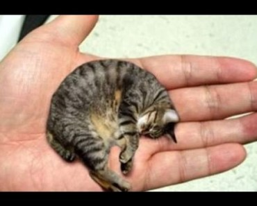 13 Smallest Animals In The World - 13 smallest animals in the world