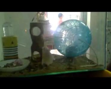 hamster funny - 1512503416 hamster funny