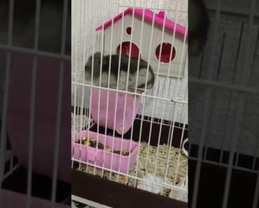 Funny hamster - 1514598396 funny hamster