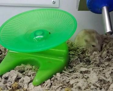 Funny hamster - 1514754915 funny hamster
