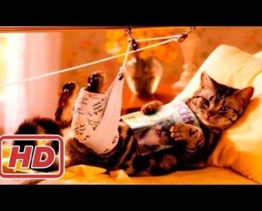 Animal Fails of the Week 3 March 2017 - Dog Fails - Cat Fails - Animal Fails Compilation - animal fails of the week 3 march 2017 dog fails cat fails animal fails compilation