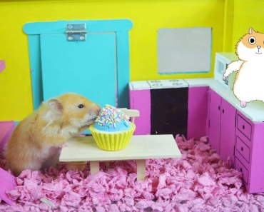 CUTE! Hamster Eats Cupcake With Sprinkles! -Hamster Cage Tour! - The Cupcake HamHam Show! - cute hamster eats cupcake with sprinkles hamster cage tour the cupcake hamham show