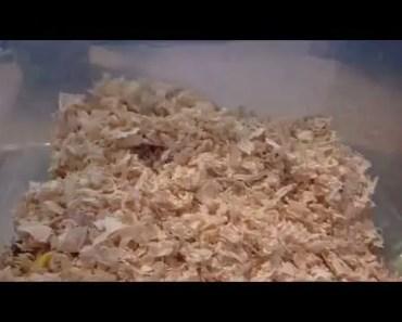 Cute hamster hide and seek game - cute hamster hide and seek game