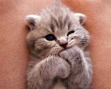 Cutest Kittens Compilation - Best Kittens Ever - cutest kittens compilation best kittens ever
