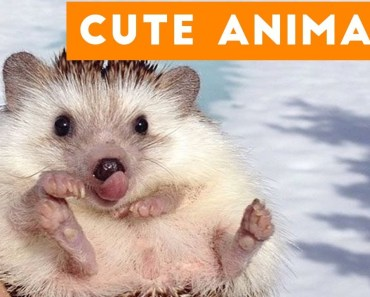 Cutest Pets of the Week Compilation December 2017 | Funny Pet Videos - cutest pets of the week compilation december 2017 funny pet videos