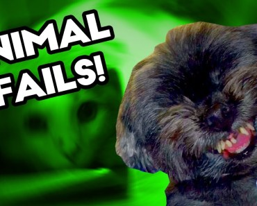 FUNNY ANIMAL AND PET FAILS! July 2017 | Funny Weekly Fail Compilation | Best Fail Montage Selection - funny animal and pet fails july 2017 funny weekly fail compilation best fail montage selection