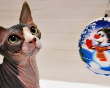 Funny Cat Plays with Christmas Tree Baubles - funny cat plays with christmas tree baubles