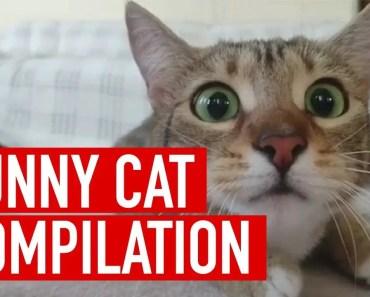 funny cat - funny cat