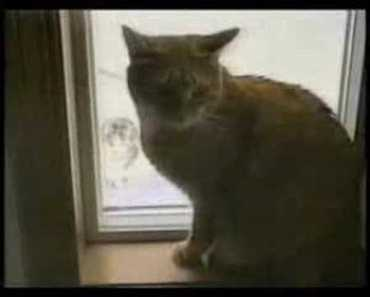 Funny Cats-Hamster Style - funny cats hamster style
