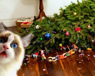 Funny Cats Love Christmas Trees Compilation NEW - funny cats love christmas trees compilation new