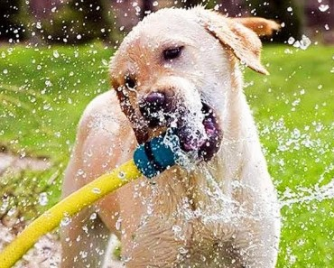 Funny Dogs Playing With Hose Compilation - funny dogs playing with hose compilation