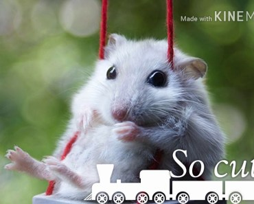 Funny Hamsters - funny hamsters