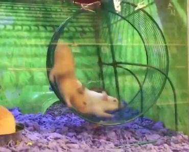 HAMSTER EMERGENCY - hamster emergency