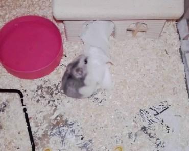 Hamster funny moments - hamster funny moments