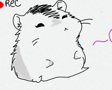 Hamster Lola - hamster lola