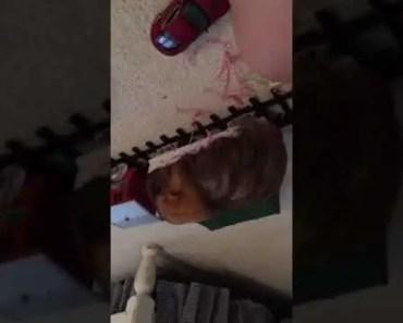 Hamster rides train - hamster rides train