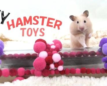 Hamster Toys : DIY Hamster - hamster toys diy hamster