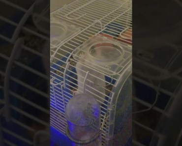 Hamster trys to escape cage - hamster trys to escape cage
