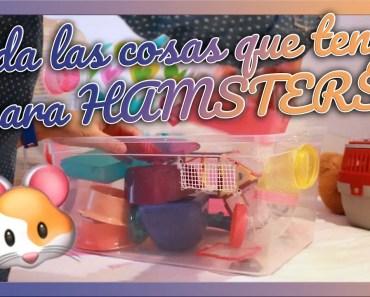 HAUL completo de todas jaulas, juguetes y comida de HAMSTERS - haul completo de todas jaulas juguetes y comida de hamsters