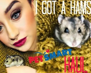 I GOT A HAMSTER ... HUGE HAMSTER HAUL - i got a hamster huge hamster haul