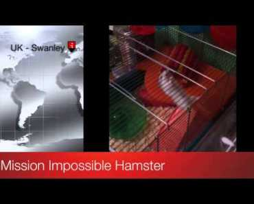 Incredible Funny Hamster Trying To Escape - incredible funny hamster trying to escape