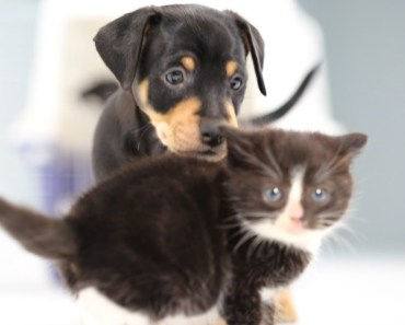 Kittens Meeting Puppies For The First Time - kittens meeting puppies for the first time